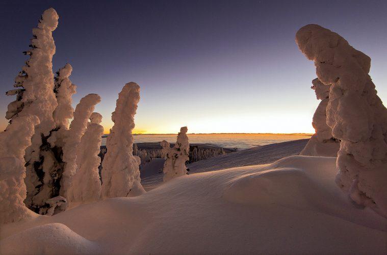Snow ghosts at sunrise at the 'top of the world', Sun Peaks Resort, north of Kamloops, Thompson Okanagan region, British Columbia, Canada