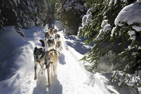 A couple enjoys a day of dog sledding at Sun Peaks Resort, near Kamloops, Thompson Okanagan region, British Columbia, Canada