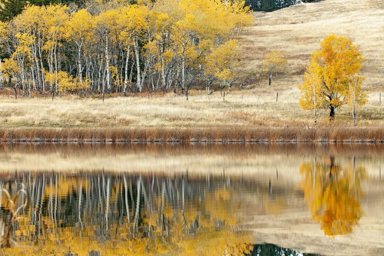 A beautiful scene in the fall is reflected in a small lake south of Kamloops, Thompson Okanagan region, British Columbia, Canada