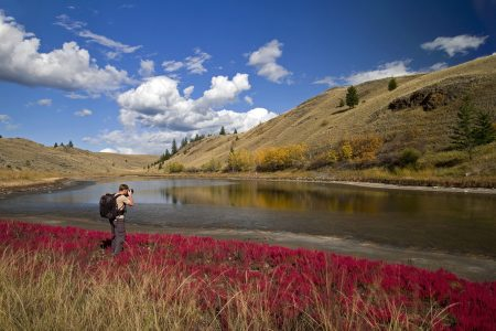 A photographer records a beautiful fall day while on a lake with red bloom in the foreground near Kamloops, British Columbia, Thompson Okanagan region, Canada