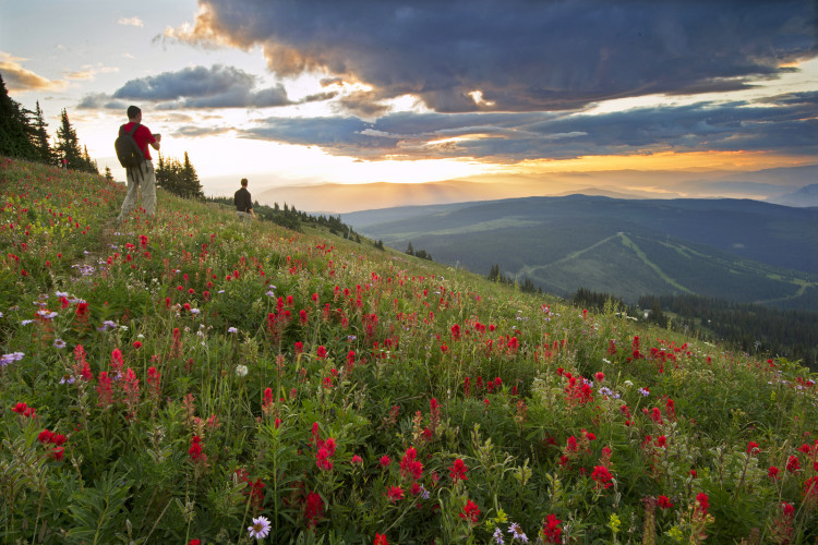 Hiking in alpine flowers, Sun Peaks, British Columbia, Canada,