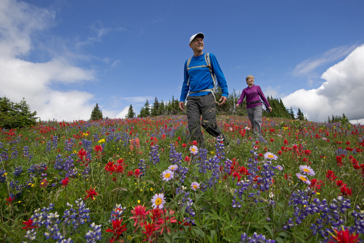 Hiking in the flowers, Sun Peaks resort, Kamloops, BC, Canada,  leisure activity, outdoors, nature