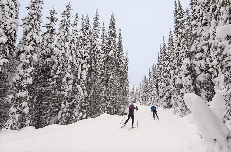 Cross country - Nordic skiers make their way on a groomed trail with snow covered trees at Sun Peaks Resort near Kamloops, BC, Canada
