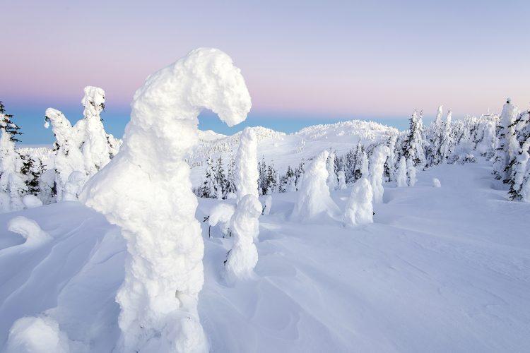 Snow Ghosts at the top of Tod Mountain, Sun Peaks resort, near Kamloops, Thompson Okanagan region, British Columbia, Canada