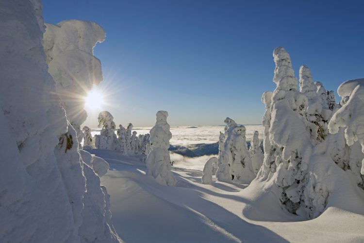Snow ghosts at sunrise, Sun Peaks ski resort, Thompson Okanagan region, BC, Canada