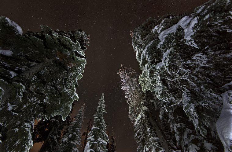 Spruce trees at Sun Peaks at night, near Kamloops, Thompson Okanagan region, British Columbia, Canada