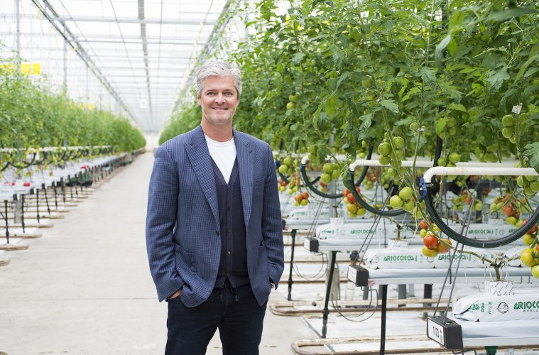 CEO of Windset Farms in Delta, British Columbia posing for portrait inside the greenhouse.