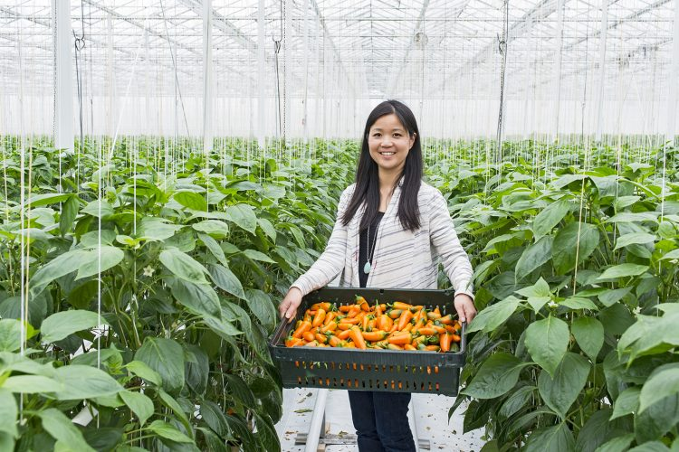 A marketing manager at a Vancouver green house operation takes time to display some the harvest options during a commercial shoot, Vancouver, British Columbia, Canada