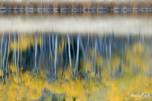 fall reflection, water, trees, Kamloops, Kelly Funk, photographer, commercial, professional, British Columbia, Canada