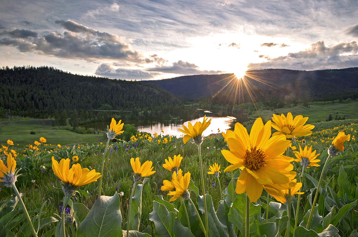 Spring and Balsamroot flowers at Lac du Bois protected Grasslands Park, near Kamloops, British Columbia, Canada