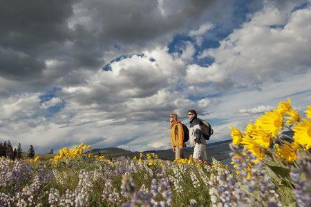 hiking in wild flowers, south of Kamloops, Thompson Okanagan region, British Columbia, Canada