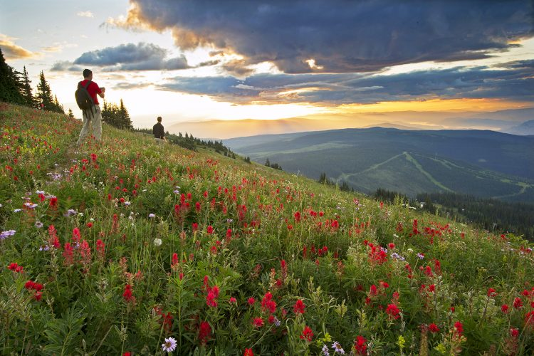 Photographers experience first light and sunrise at the top of Sun Peaks ski Resort during wild flower festival, near Kamloops, Thompson okanagan region, British Columbia, Canada