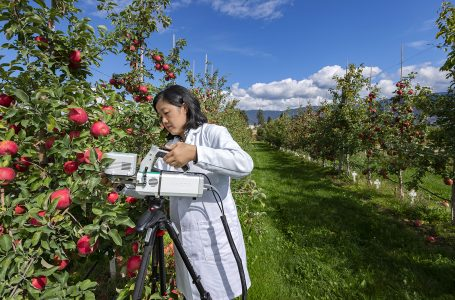 An Agriculture and Agri-Food Canada scientist checks the moisture level of leaves using high tech infa red imaging, Summerland research centre, British Columbia, Canada