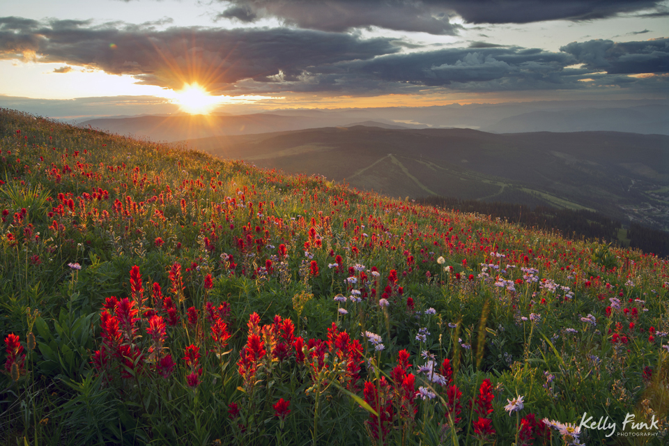 sunrise in the wildflowers at Sun Peaks resort, near Kamloops, British Columbia, Thompson Okanagan region, Canada