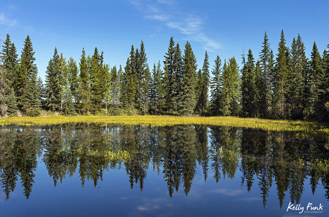 Reflections in a pond near Vanderhoof, British Columbia, Canada
