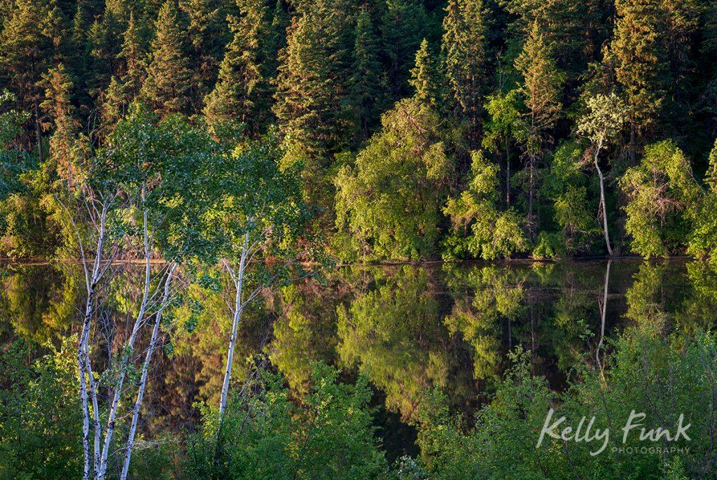 Deciduous trees in Lac du Bois Provincial park, near Kamloops, British Columbia, Canada