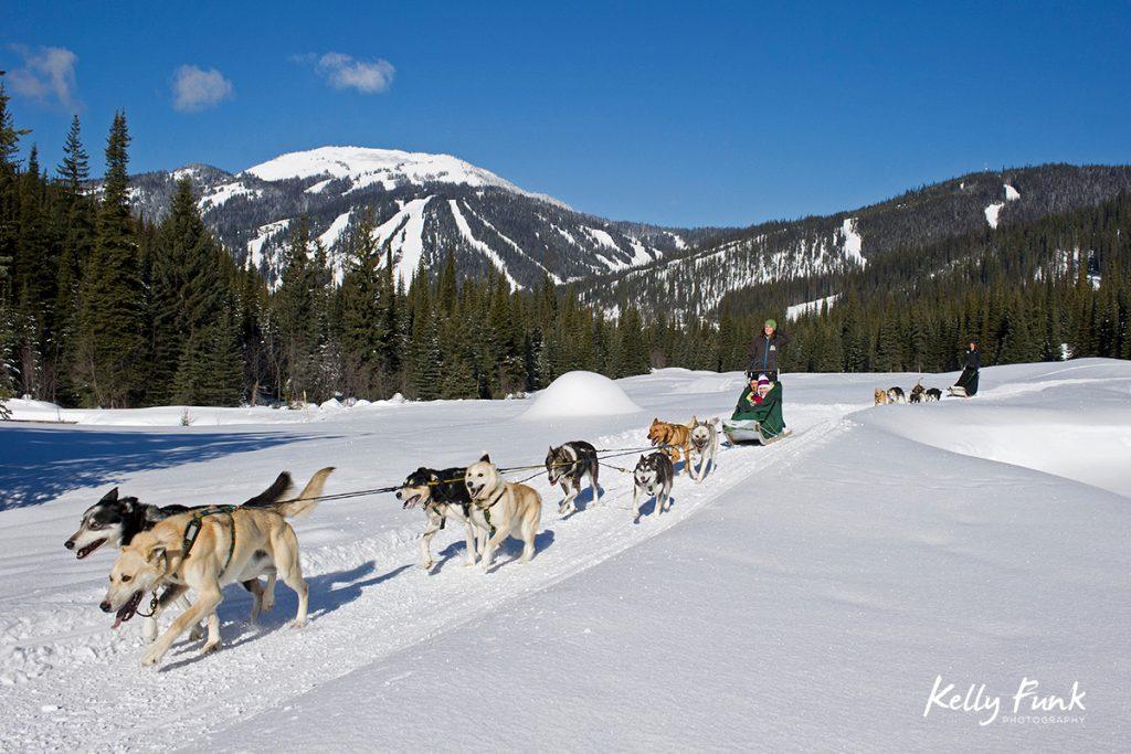 A couple enjoys a day of dog sledding at Sun Peaks Resort with Tod Mountain the background, near Kamloops, Thompson Okanagan region, British Columbia, Canada
