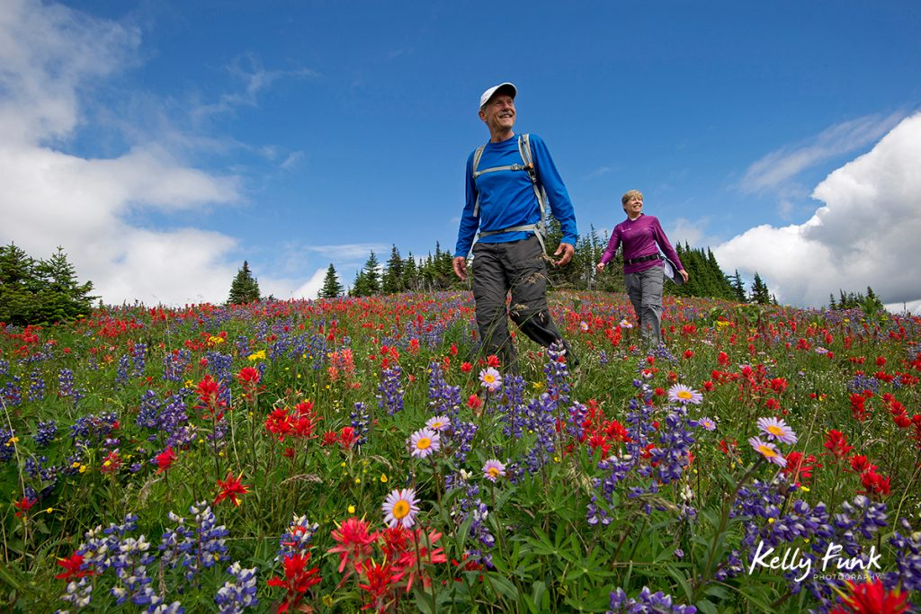 A couple enjoys a hike at the top of Sun Peaks Resort during the height of the wildflowers, near Kamloops, Thompson Okanagan region, British Columbia, Canada