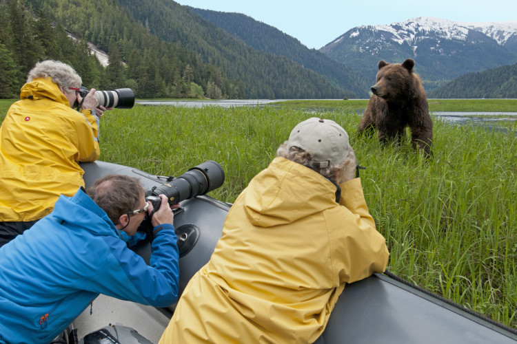 A group of tourists photographs a male Grizzly Bear (Ursus Arctos) in the Khutzeymateen protected area, Northeast of Prince Rupert in the Northern BC region of Canada