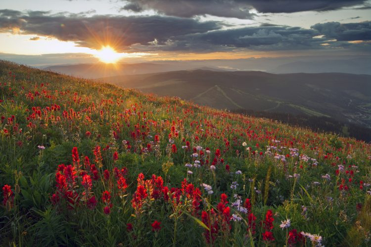 Stunning morning during the wildflower season over Sun Peaks ski resort, Thompson Okanagan region, BC, Canada