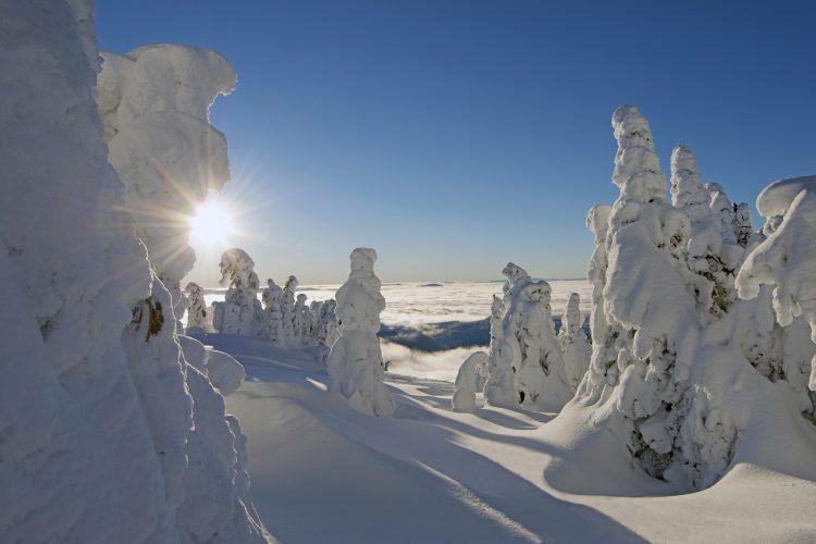 Snow ghosts at sunrise, Sun Peaks ski resort, Thompson Okanagan region, BC, Canada