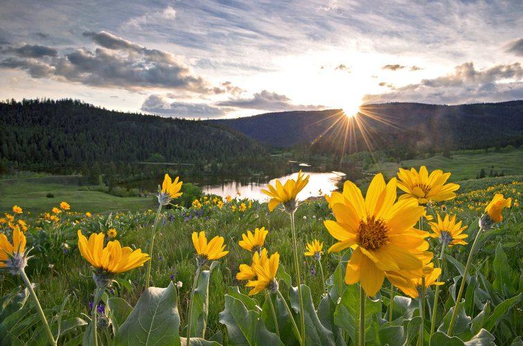 Spring flowers at Lac du Bois grasslands provincial park, near Kamloops, British Columbia, BC, Canada