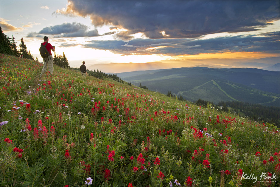 Hiking in the flowers, Sun Peaks resort, Kamloops, BC, Canada,