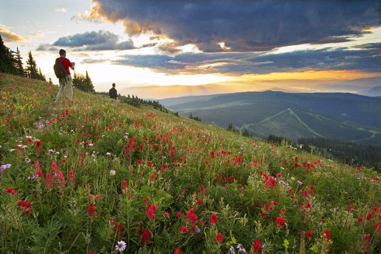 Photographers experience first light and sunrise at the top of Sun Peaks ski Resort during wild flower festival, near Kamloops, Thompson okanagan region, British Columbia, Canada