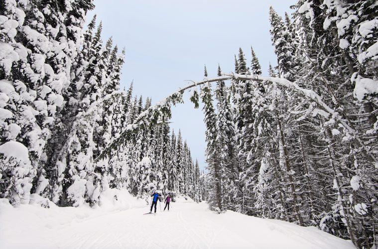 A couple cross country skies after a fresh snow, Sun Peaks Resort, north of Kamloops, Thompson Okanagan region, British Columbia, Canada