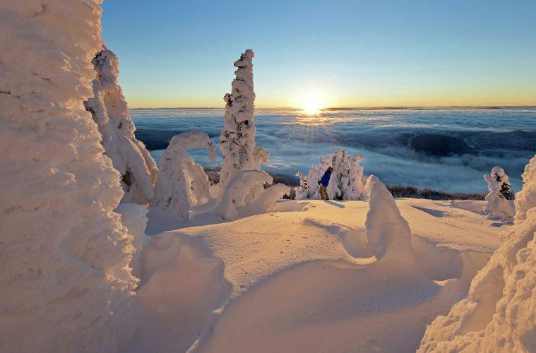 Snow ghost dwarf a skier at sunrise, Sun Peaks Resort, north of Kamloops, Thompson Okanagan region, British Columbia, Canada