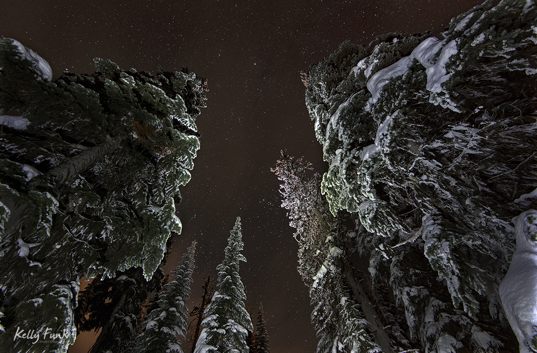 Spruce trees at Sun Peaks at night, near Kamloops, Thompson Okanagan region, British Columbia, Canada