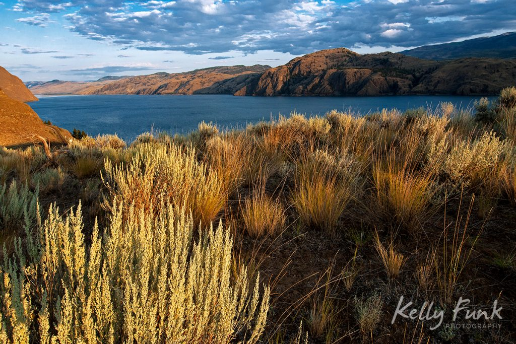 Sage and bunchgrass on the south shores of Kamloops Lake, Lac du Bois protected grasslands, British Columbia, Canada