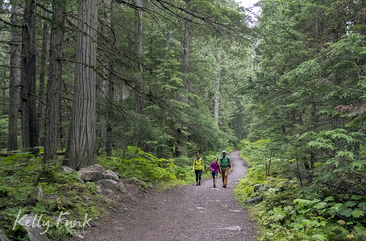 Mount Robson trail 3