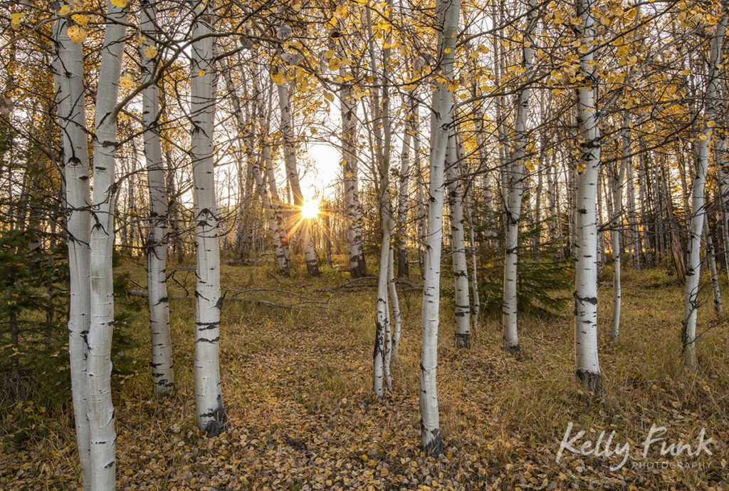 Kamloops sunrise and fall colors